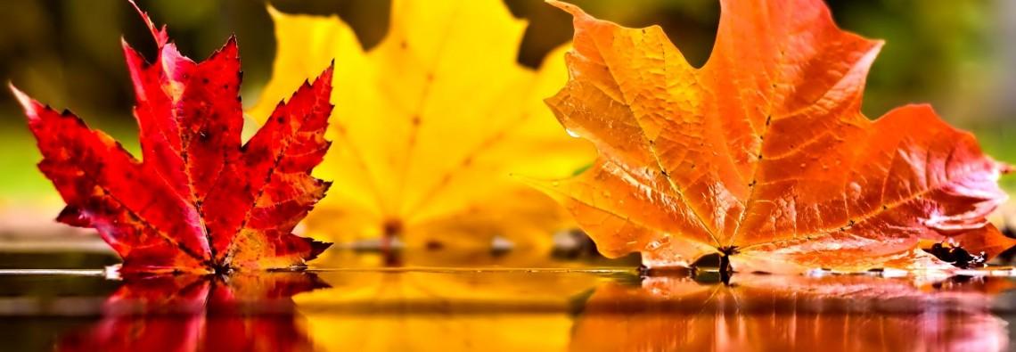 November-Wallpaper-HD-4